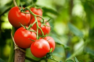10 Good reasons You Should Be Eating Tomatoes