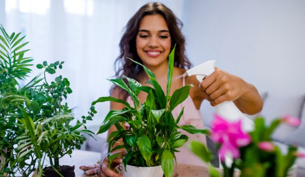How a Lucky Plant Can Bring Peace and Prosperity to Your Home